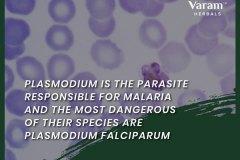 Plasmodium_parasite